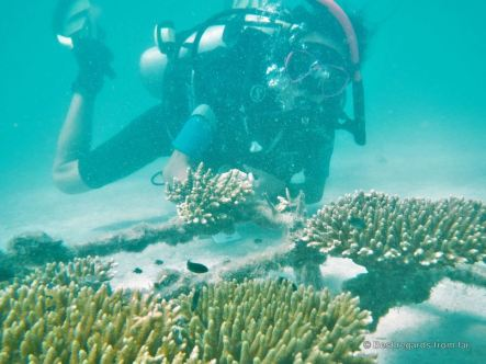 Monitoring the coral nursery, Koh Rong Samloem, Cambodia