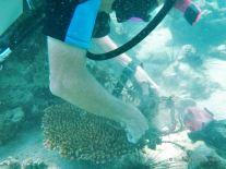 Clean up dive, Koh Rong Samloem, Cambodia