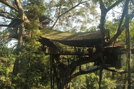 Ziplining into treehouse nr. 1, The Gibbon Experience, Laos