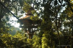 Ziplining into our treehouse (nr. 7), The Gibbon Experience, Laos