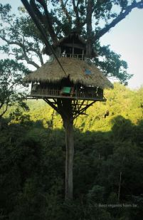 Ziplining into treehouse nr. 5, The Gibbon Experience, Laos