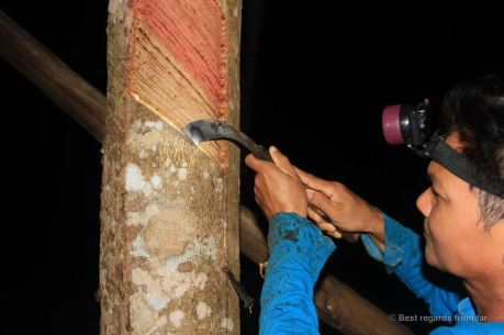 Rubber tapping at night, Manora Garden, Phang Nga, Thailand