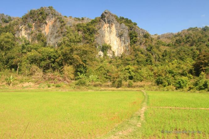 Rice fields along the road, the loop, Laos