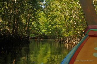 Navigating through the mangrove to the James Bond island, Phang Nga bay, Thailand