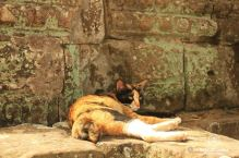 A lazy cat in Angkor, Cambodia