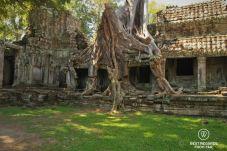 Nature taking over at Preah Khan, Ankgor, Cambodia