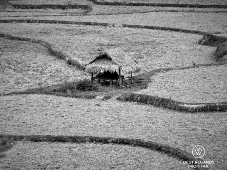 Rice fields along the banks of the Nam Ou River, Laos