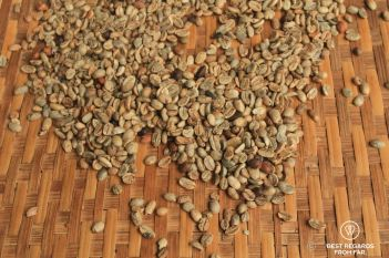 Coffee beans drying at Mr. Vieng's coffee plantation, the Swing, Laos