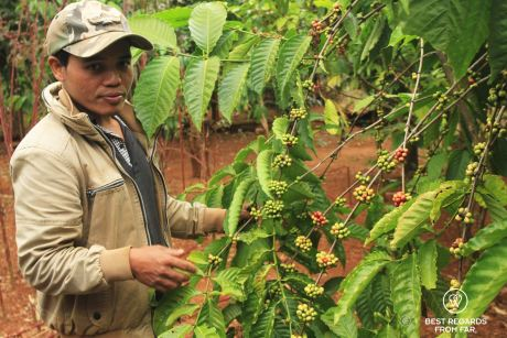 Mr. Vieng on his coffee plantation, the Swing, Laos