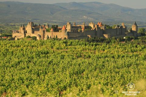 View on the medielva city of Carcassonne from the green vineyards, France