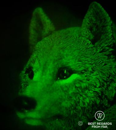 Hologram of a fox, Holographic Studios, New York City
