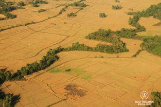 Rice fields, Vang Vieng, Laos