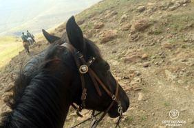 A robust and all-terrain Basuthu pony, Lesotho