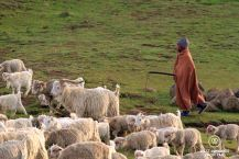 Young shepherd, pony trek, Lesotho