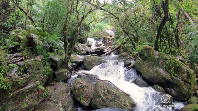 Pristine forest, canyoning in Sabie by the Blyde River Canyon, South Africa