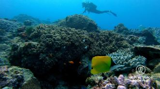 Writer Marcella van Alphen SCUBA diving Sodwana Bay amongst tropical fish, Souh Africa.