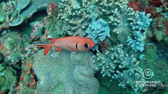 SCUBA diving Sodwana Bay, Souh Africa