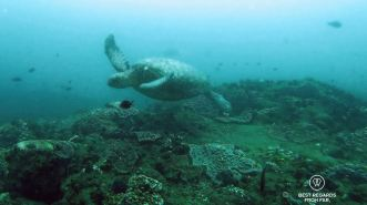 Green turtle, SCUBA diving Sodwana Bay, Souh Africa
