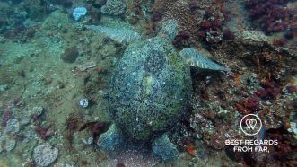 The magic of spotting a green turtle