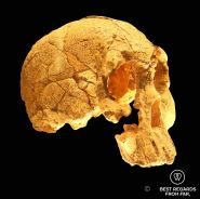 Homo Habilis, Cradle of humankind, South Africa