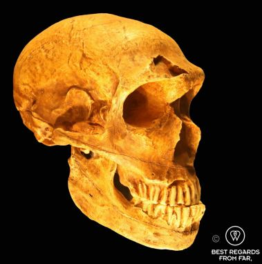Homo Neanderthalensis, Cradle of humankind, South Africa