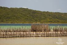 Local fish traps in the lakes of Kosi Bay, South Africa