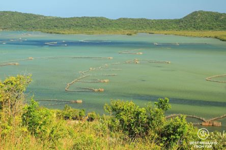Fish traps in the Kosi Bay Lake, South Africa