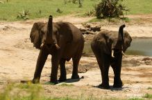 Elephants smelling us, Tembe Elephant Park, South Africa