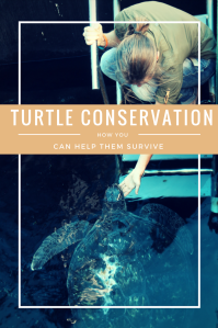 turtle conservation pin pinterest(1)