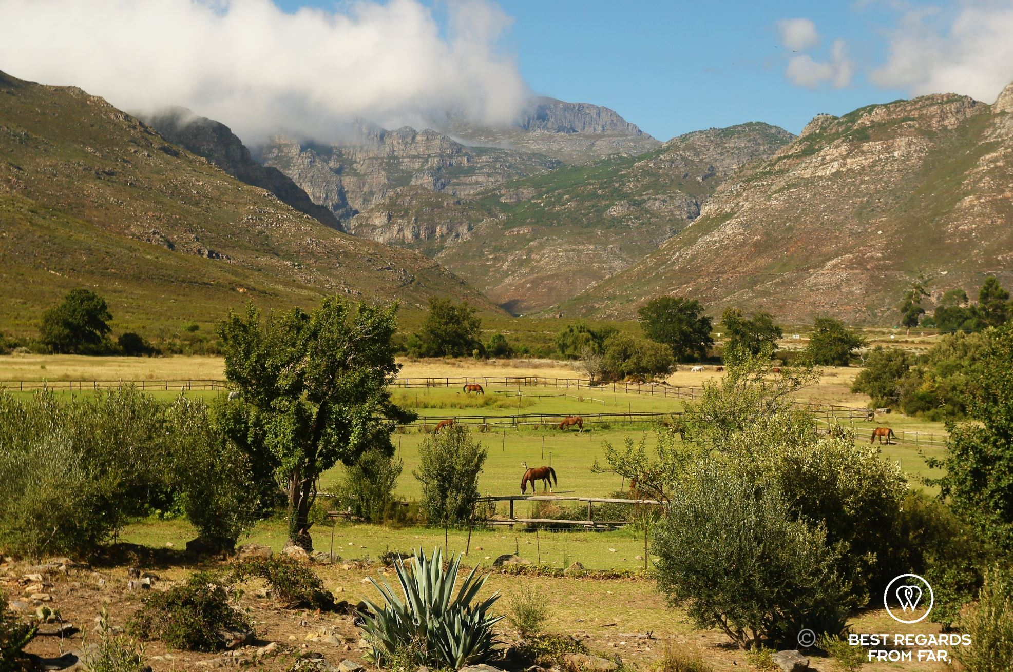Horses in fields with mountains in the background, Franschhoek, South Africa