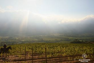 Sunrise ride through the vineyards of Franschhoek, South Africa