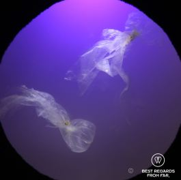 Turtles can easily mistake a plastic bag for a jelly fish, the Two Oceans Aquarium turtle rehabilitation centre, Cape Town, South Africa