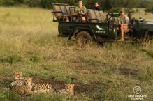 A couple observing a cheetah family from an &Beyond game drive vehicle with ranger and tracker at Phinda Private Game Reserve, South Africa.