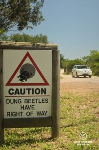 Caution sign for dung beetles self-driving the safari parks, Tembe elephant park, South Africa