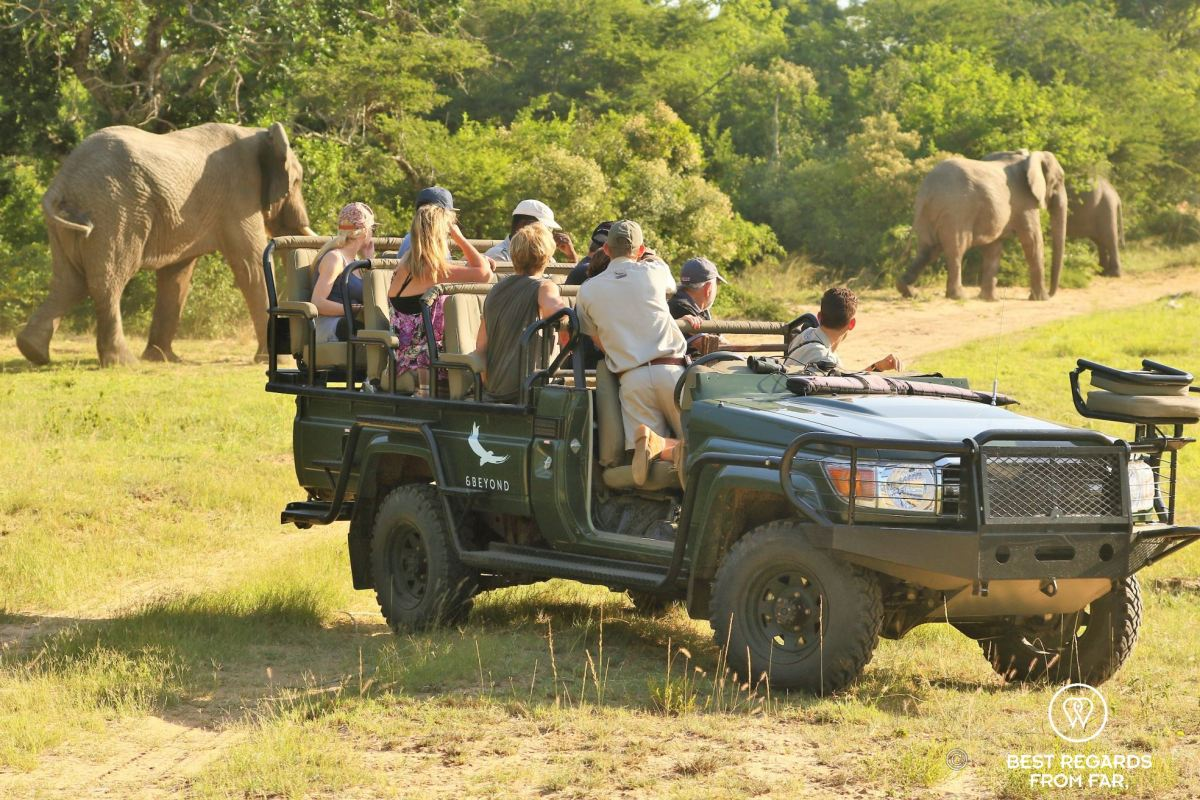 Small group in an &Beyond game drive vehicle spotting close-by elephants at Phinda Private Game Reserve, South Africa.