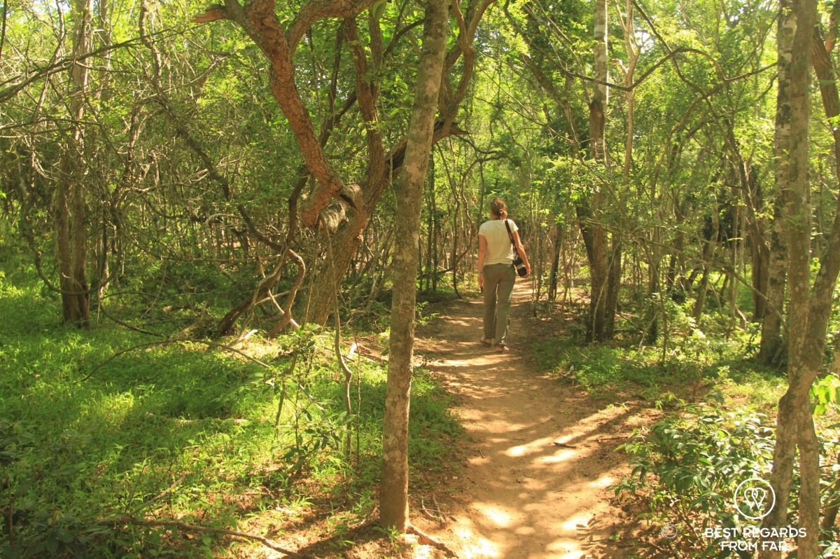 Walking through the sand forest to the private lodge, &Beyond Phinda Private Game Reserve Forest Lodge, South Africa.