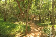 Walking through the sand forest to our private lodge, &Beyond Phinda Private Game Reserve Forest Lodge, South Africa
