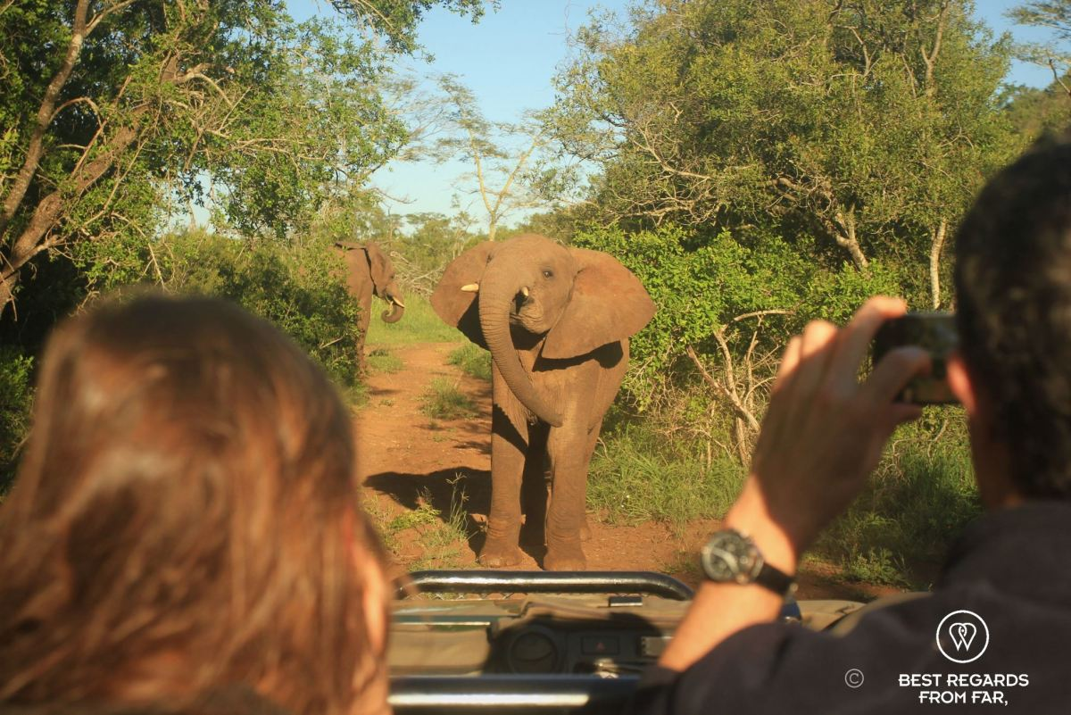 How to select the best game park for your safari in South Africa?