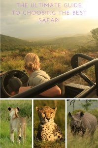 Blonde ranger in a game drive vehicle observing lions, a lion cub in the grass, a cheetah at sunset and a black rhino.