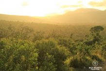 Golden sunrise over the hills and green shrub in Hluhluwe iMfolozi, South Africa.