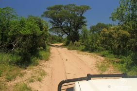 The precious and rare Sand Forest at &Beyond Phinda Private Game Reserve, South Africa.