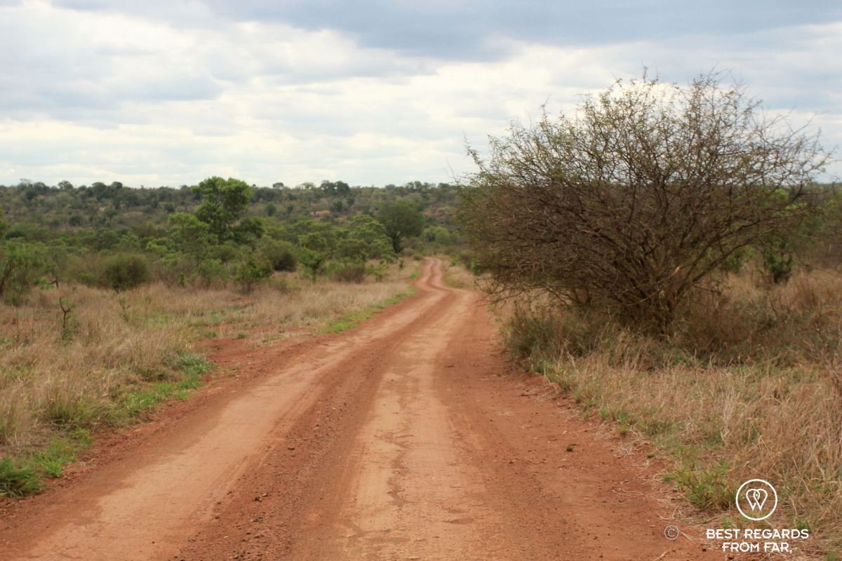 Dirt road through the savannah in the Kruger Park South Africa.
