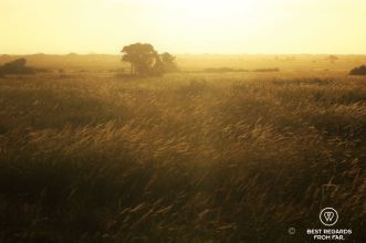 Sunset on the African savannah, Phinda Private Game Reserve, South Africa.