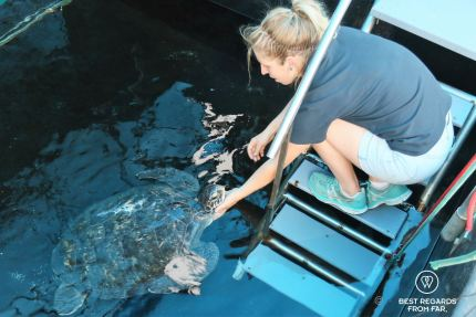 Talitha Noble and Sandy, the Two Oceans Aquarium turtle rehabilitation centre, Cape Town, South Africa