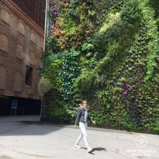 Vegetal wall Caixa Forum, Madrid