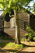 Birch tree with wooden cabin and tulips in Frogner, Oslo, Norway