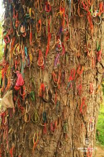 The uspeakable tree, the killing fields, Phnom Penh