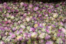 Rose buds, Oman