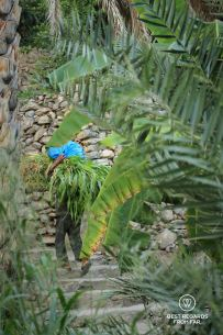 Carrying up the harvest by the falaj in Misfat Al Abriyeen, Oman