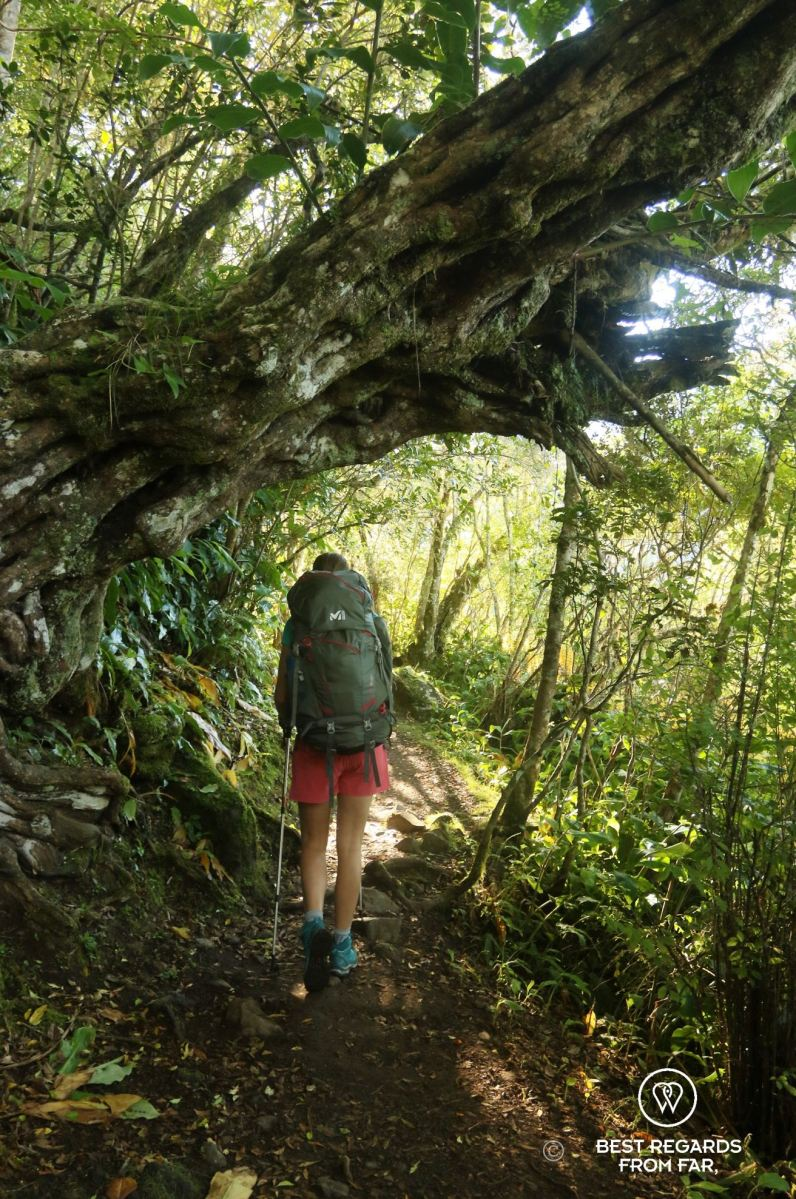A multiday hiker with a heavy backpack walking on a forest hiking trail in the mountains of Réunion Island